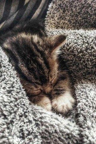 sleeping kitten                                                       …