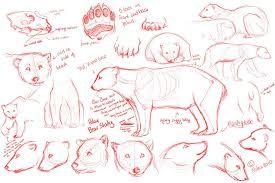 baby polar bear sketch