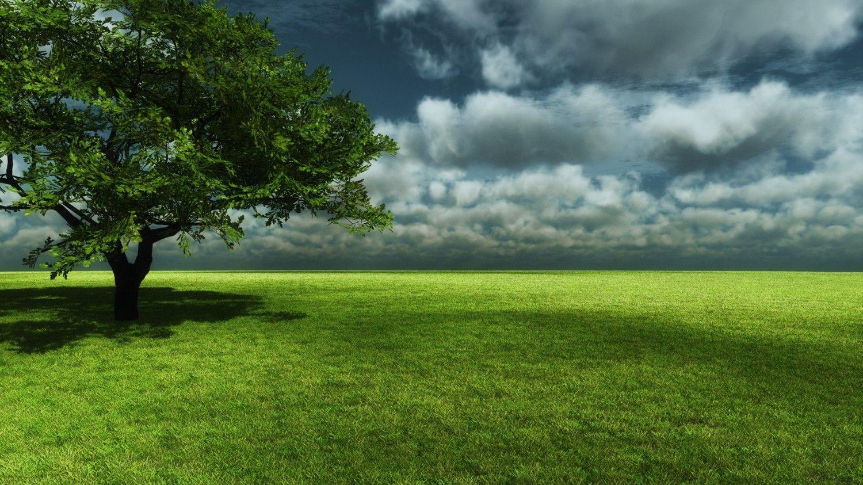 3D Nature Tree Wallpapers HD Wallpaper gfg Pinterest