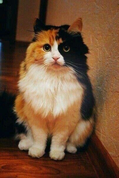 So Cute Cute Cats