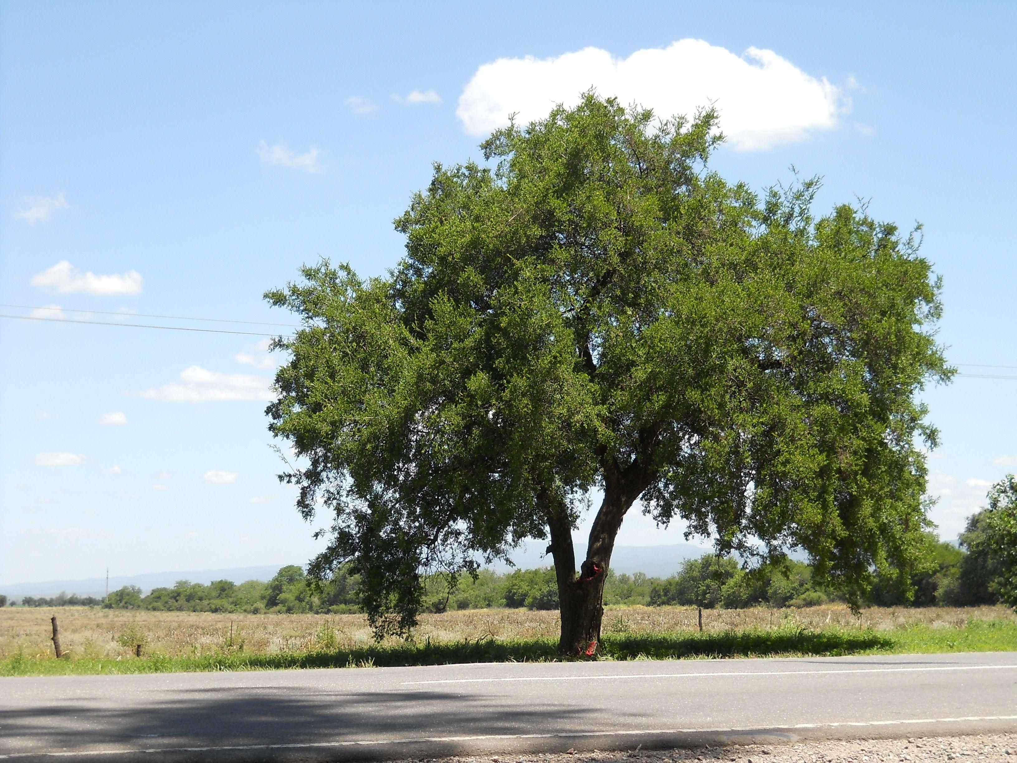Quebracho Colorado ! | Arboles / trees | Pinterest