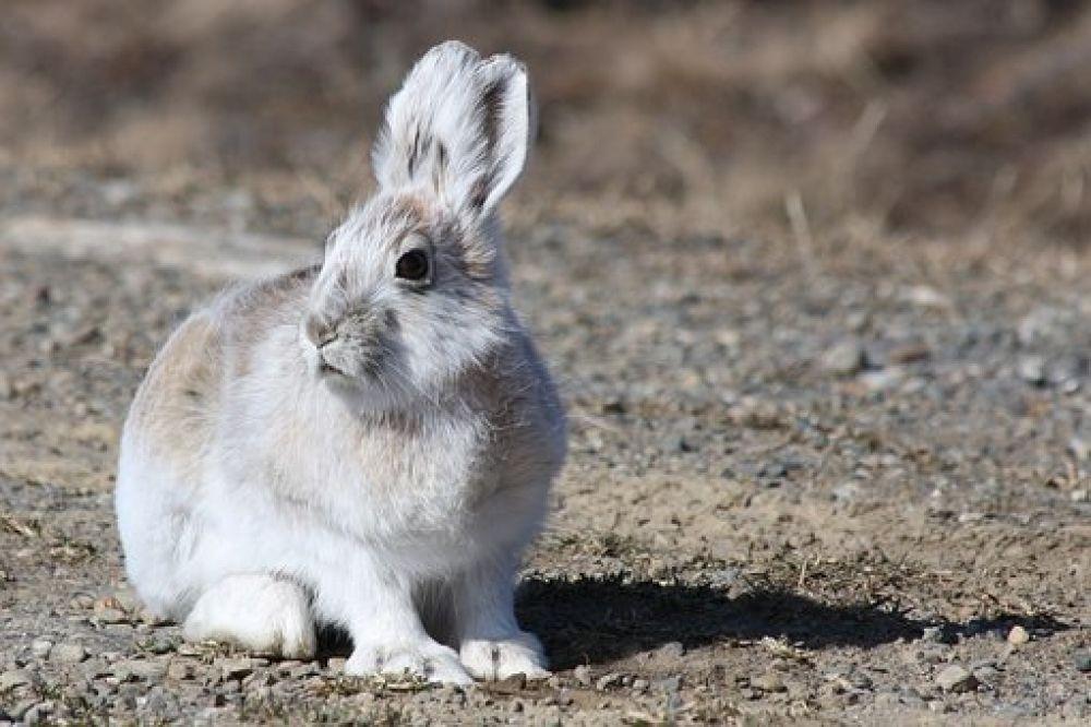 Like and share if you agree! Love Rabbits? Visit us by clicking active link on our bio/profile. #bunnysept #bunnygirls #bunnysecretstash #bunnyhouse #bunnyfresh #bunnymodel #bunnymum #bunnyhead #bunnylines #bunnyranch #bunnyfamily #bunnypinterest #bunnyinhollywood #bunnyspace #bunnyland