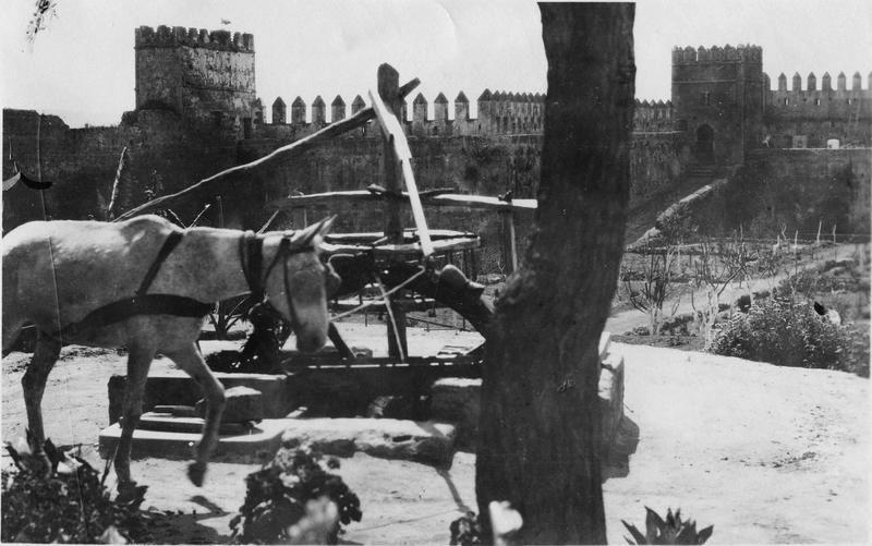 Rabat  Medersa des Oudaïas  Cheval montant l'eau dans les bassins de la Medersa des Oudaïas avec un système de pompe  1916.05.11