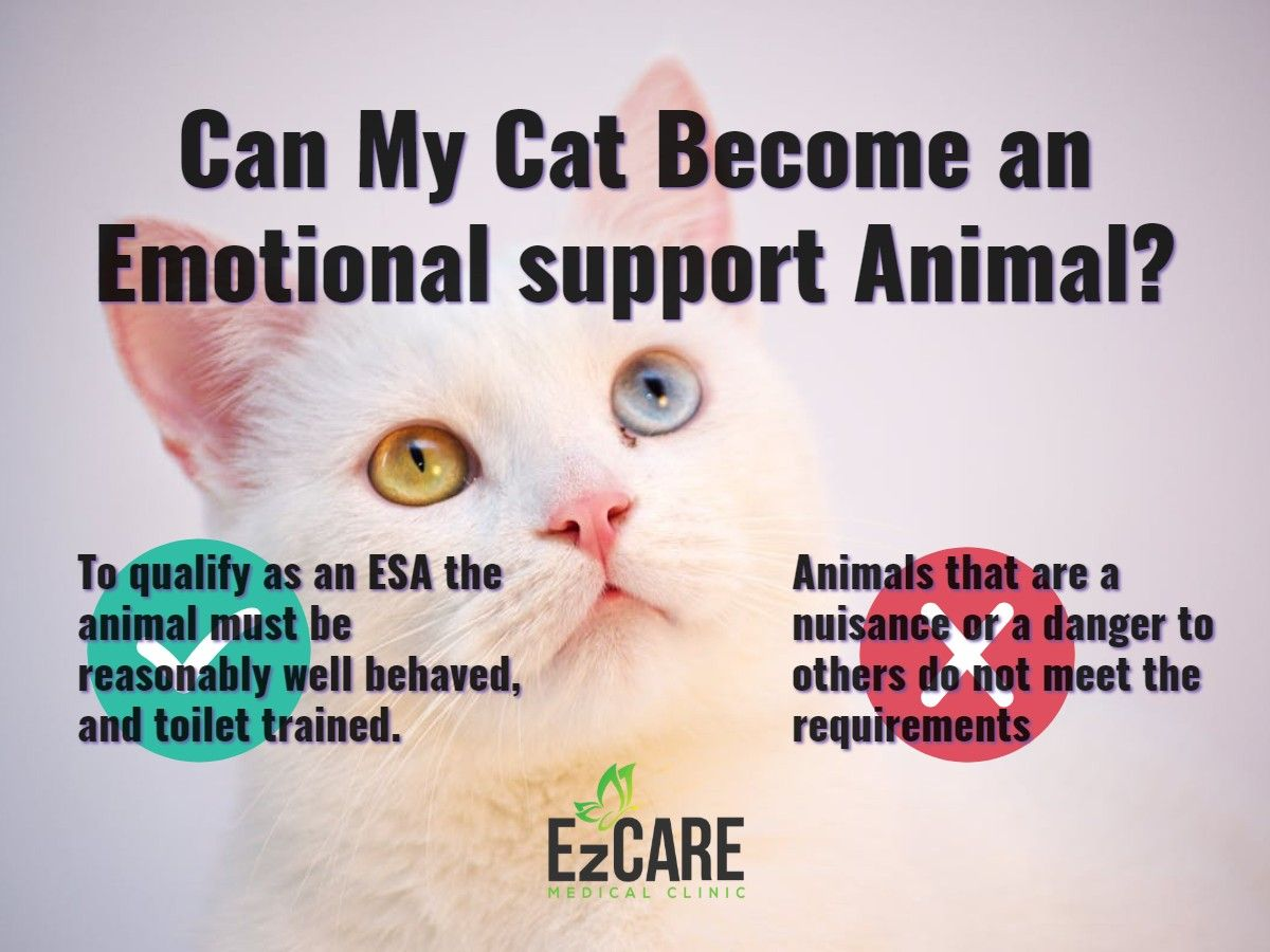 How to Register a Cat as Emotional Support Animal