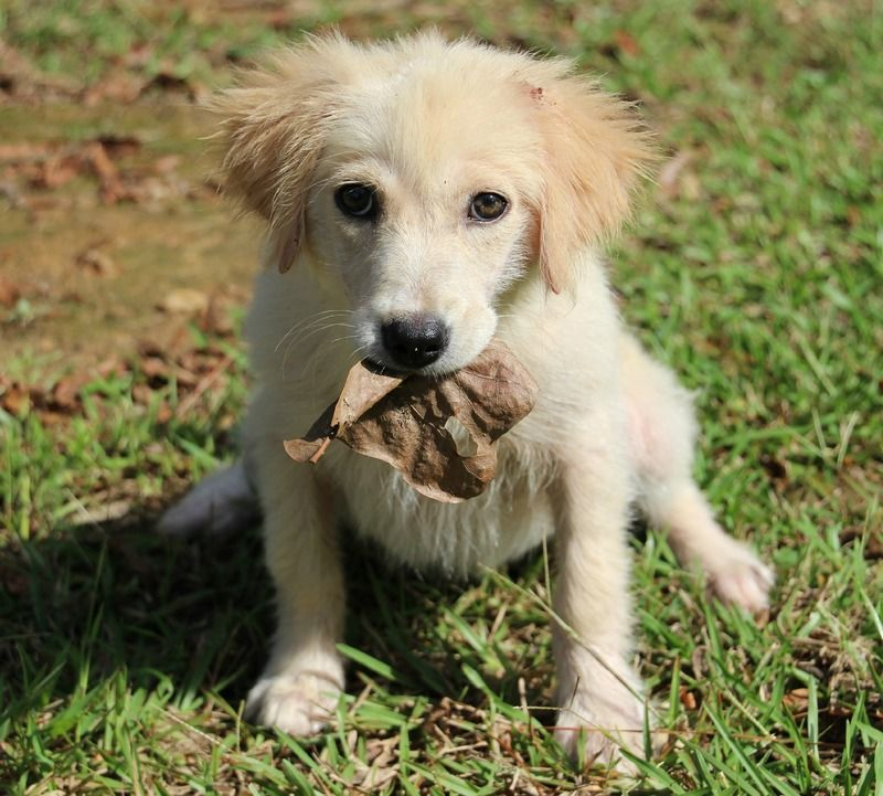 Adopt Mable On Petfinder Dog Sounds Animal Rescue League Animal Rescue