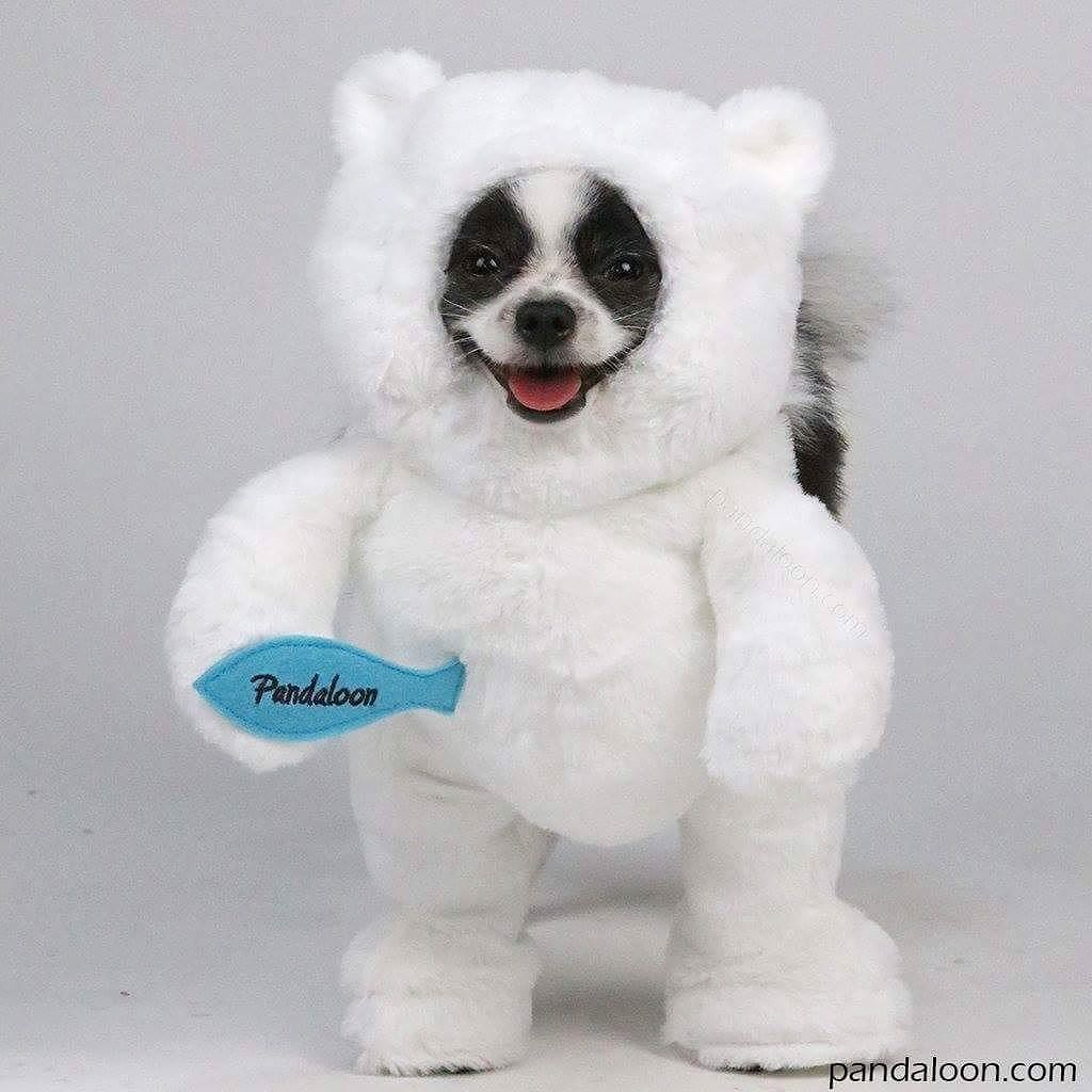 Walking Polar Teddy Bear Dog And Pet Costume As Seen On Shark
