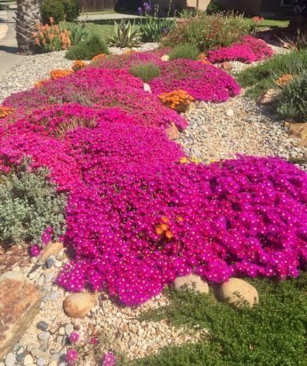 Drought Tolerant Front Yard: 22 Ideas Landscape Front Yard Drought Tolerant Xeriscaping