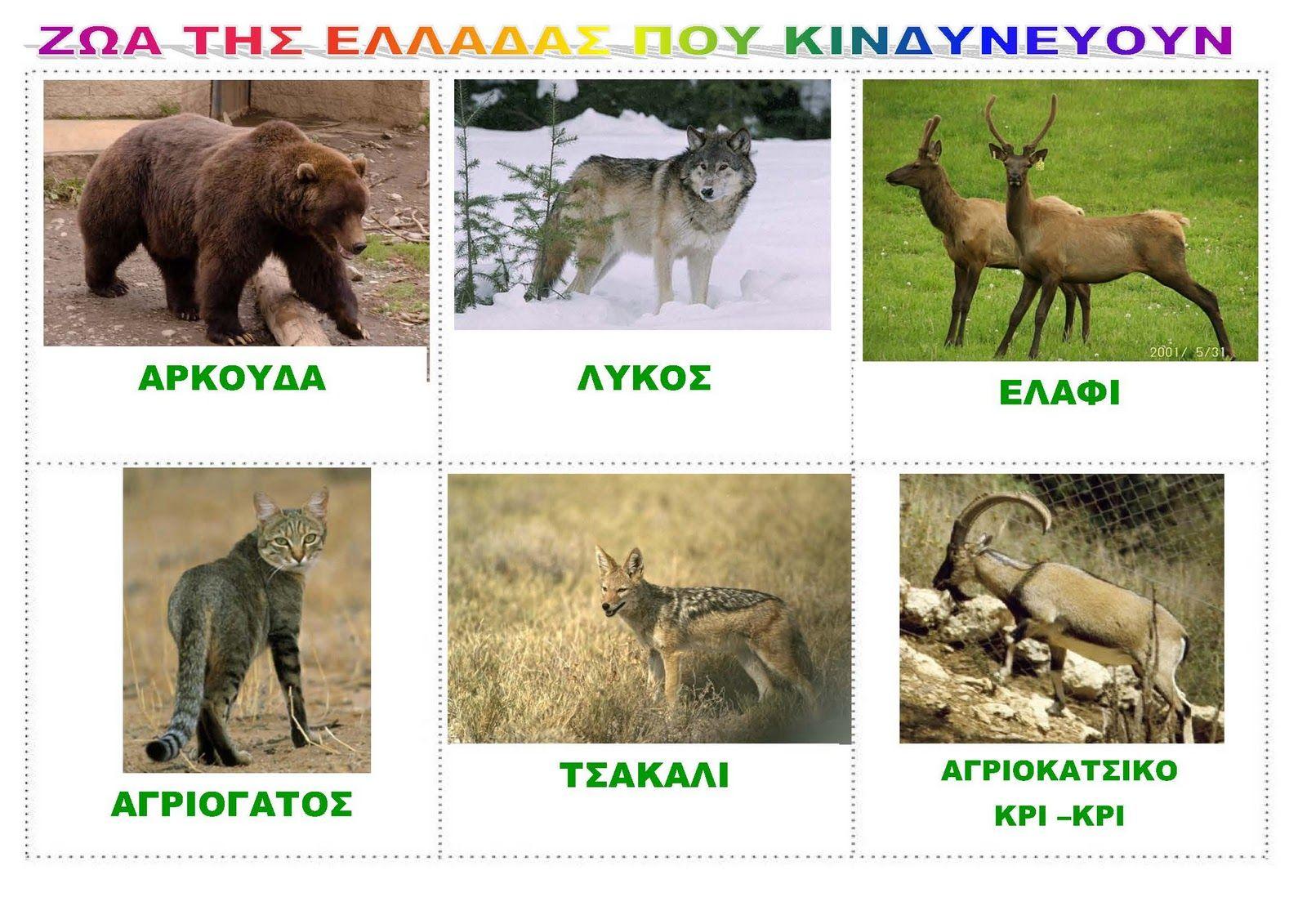 dreamskindergarten Το νηπιαγωγείο που ονειρεύομαι !: Πίνακες αναφοράς με τα ζώα της Ελλάδας που κινδυνεύουν