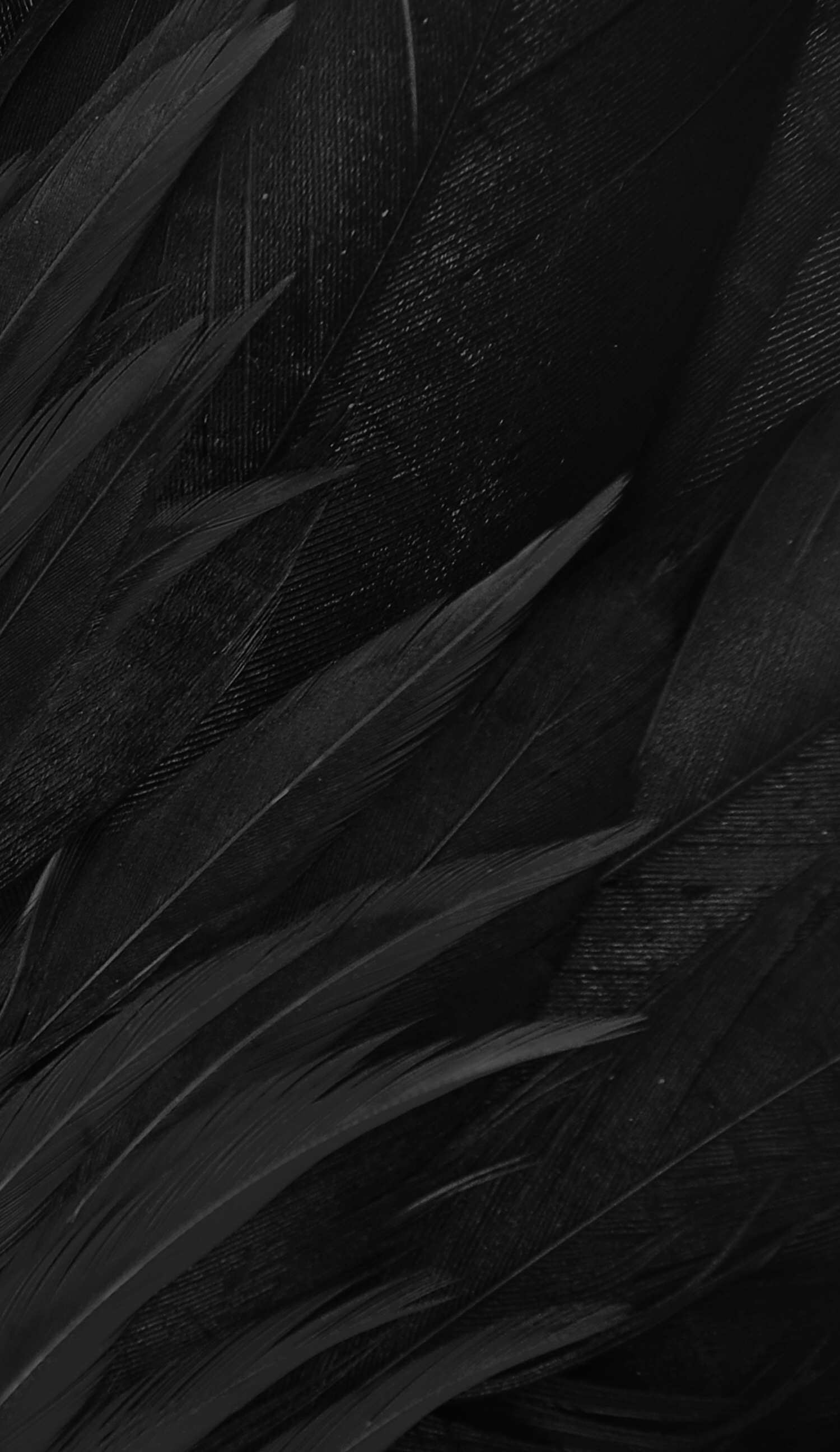 Pin By Maria Federico On Black Matte Black Background Black Wallpaper Black Feathers