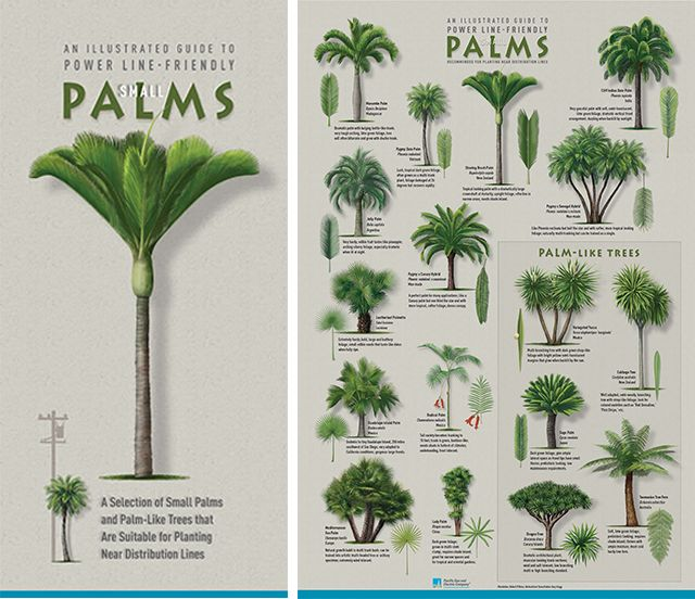 Plant The Right Tree In The Right Place Palm Tree Plant Palm Trees Landscaping Palm Tree Types