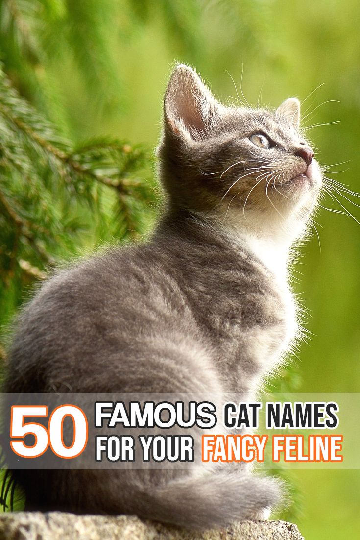 Pin by Diane Harlan on everything cats Boy cat names
