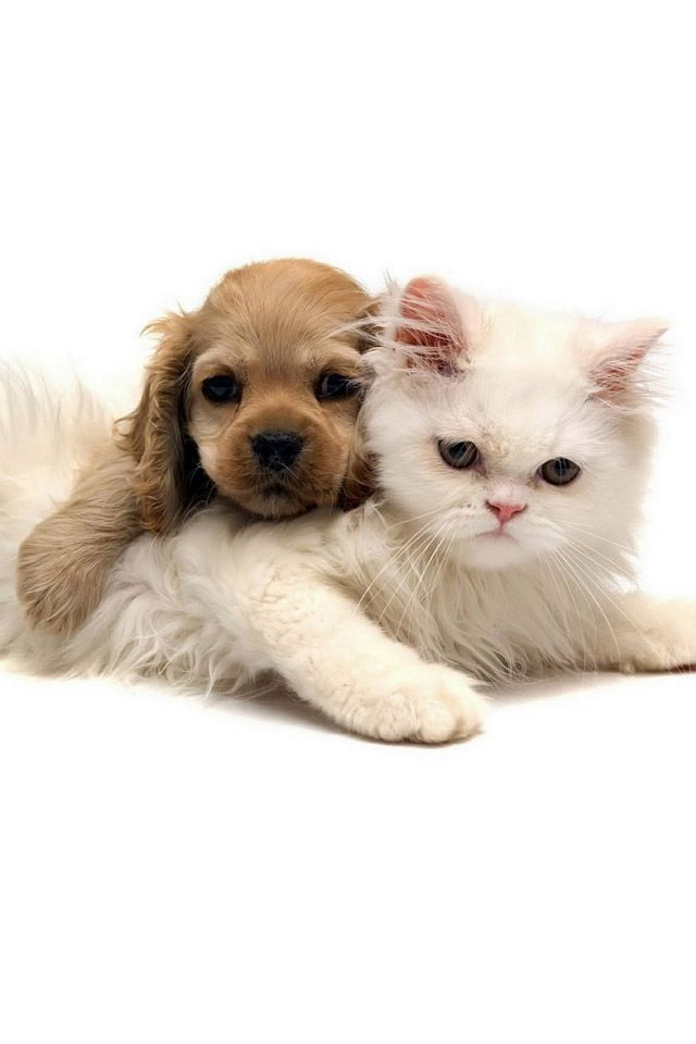 A Puppy And Kitten Best Friends Forever Cute Cats Dogs Kittens Puppies Cats Kittens