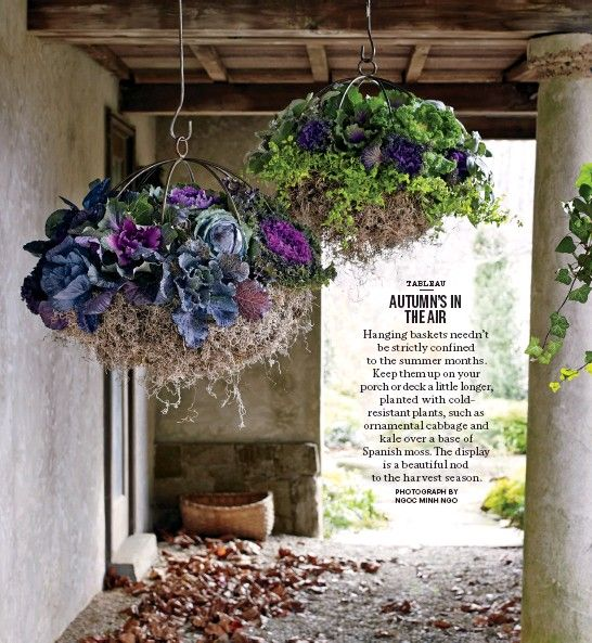 autumns in the air ngoc minh ngo ornamental cabbage kale over a base of spanish moss