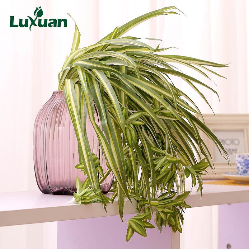 Cheap Plants Home Decor Buy Quality Grass Artificial Directly From China Fake Flower Wall S Artificial Plants Indoor Artificial Plants Decor Artificial Plants