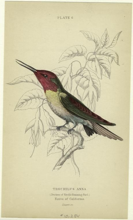 One of over 700,000 free digital items from The New York Public Library.