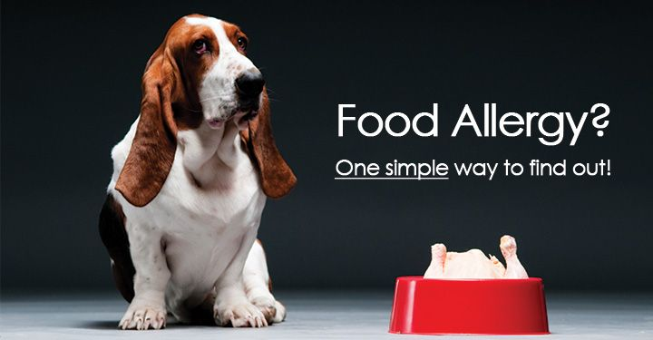 Testing Your Dog For Food Allergies Pet Allergies Dog Illnesses