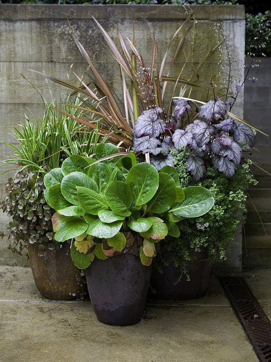 I Love The Mix Of Color And Texture Perennials Work So Well Mixed In Potted Plants Outdoor Plants Garden Containers