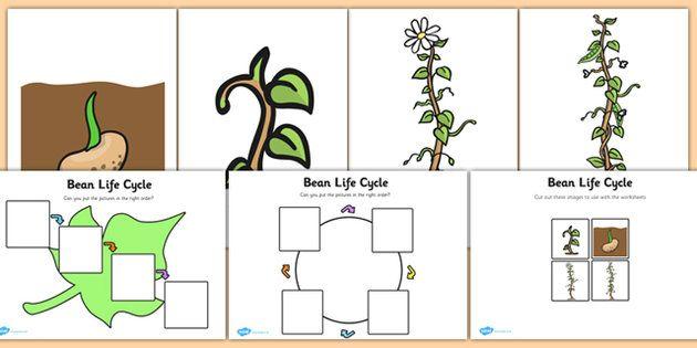 Bean Life Cycle Activity Sheet- Bean, plants, word mat, plant ...