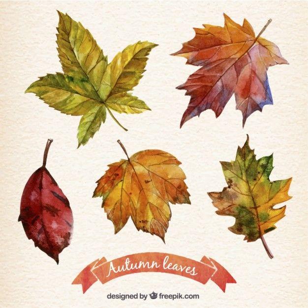 Mão pintado outono deixa coleção Vetor grátis