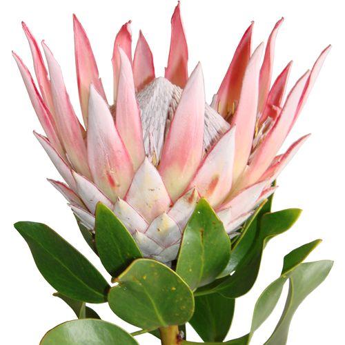 Pin On Favorite Flowers