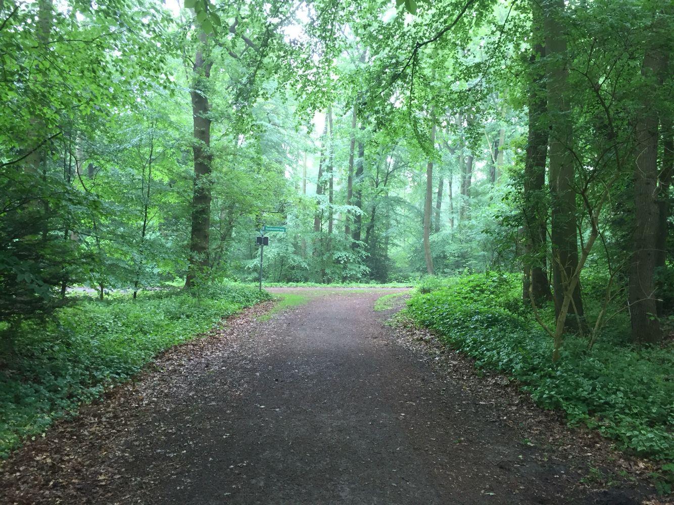 Regen im Wald, aber kein Regenwald. III