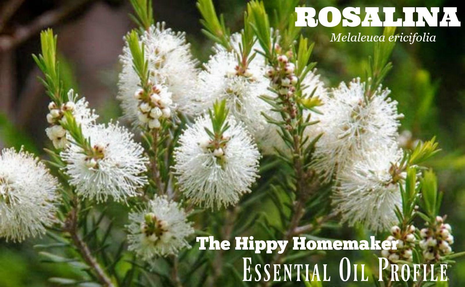 Rosalina Essential Oil The KidSafe Eucalyptus