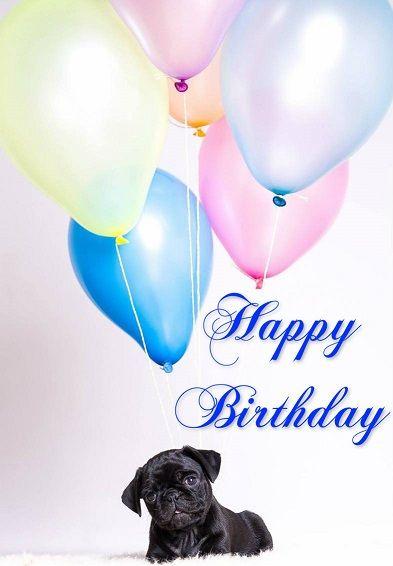 Pin By Linda Logan On Pug Birthday Cards Happy Birthday Black Happy Birthday Emoji Happy 2nd Birthday