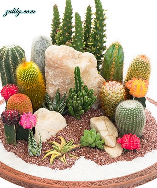15 Awesome Mini Cactus Gardens Mini cactus garden Mini