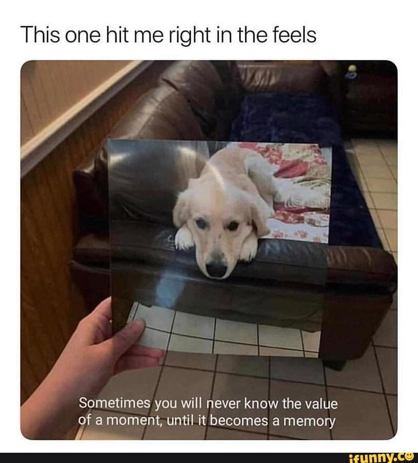 This One Hit Me Right In The Feels Sometimes You Will Never Know The Value Of A Moment Until It Becomes A Memory Chore Ifunny Dog Quotes Funny Animals Cute Animals