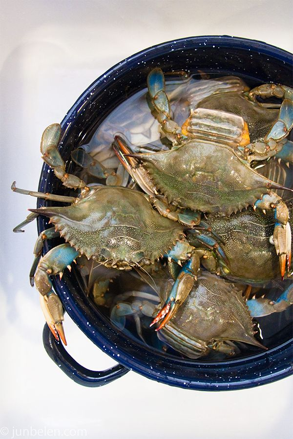 How to catch and cook blue crabs blue crabbing in the for Blue crab fishing