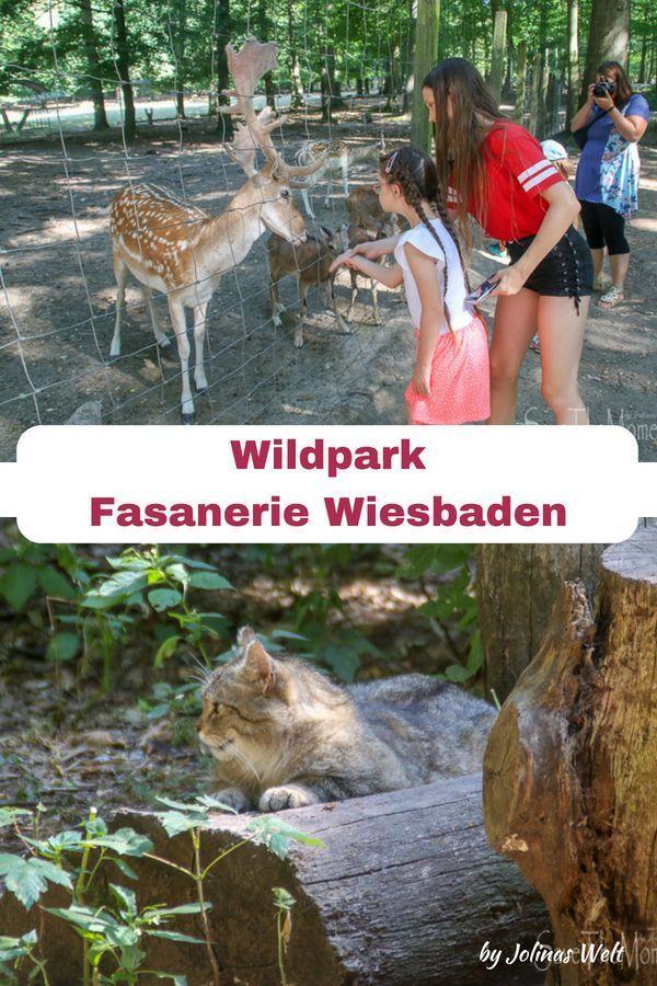 Ausflug Kinder Hessen