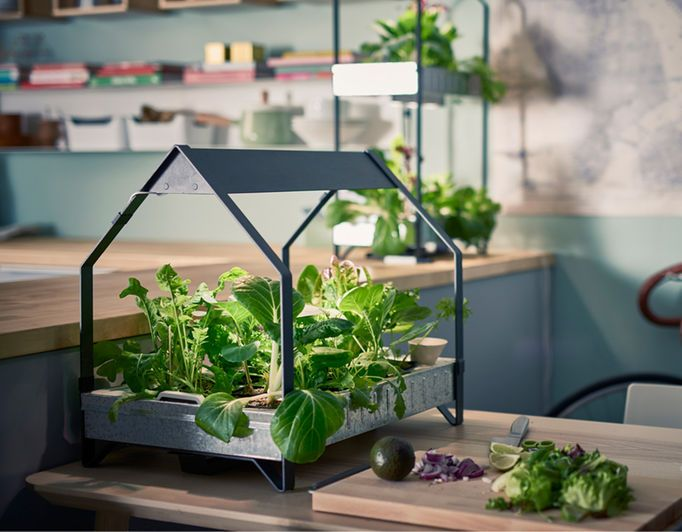 This Indoor, At Home Garden Cultivator Will Help Sprout And Grow Plants Of  All