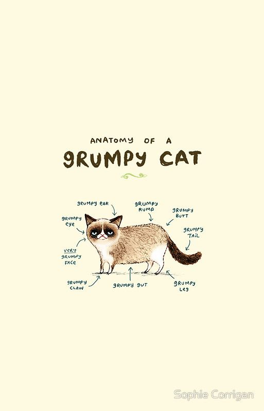 Anatomy Of A Grumpy Cat By Sophie Corrigan Grumpy Cat Cat Wallpaper Iphone Wallpaper Cat