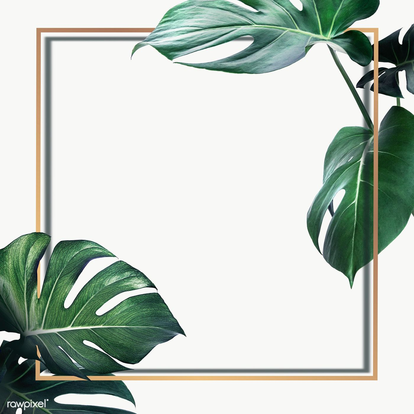 Golden Square Monstera Leaves Frame Design Resource Free Image By Rawpixel Com Gold Wallpaper Background Flower Background Wallpaper Floral Wallpaper Iphone