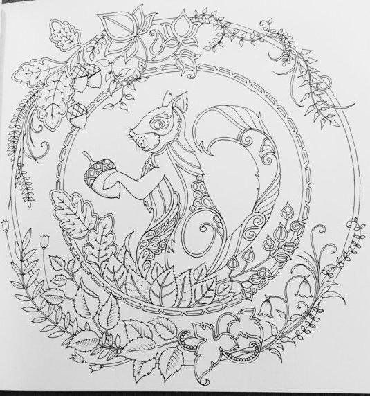Squirrel Inky Quest Colouring Book Enchanted Forest