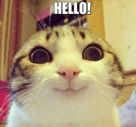 Hello Cats memes Funny Najsłodsze zwierzęta, Śmieszne
