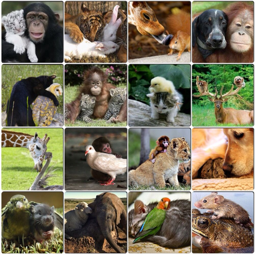 Unlikely animal friends   Unlikely animal friends, Animals friends, Cute  animals