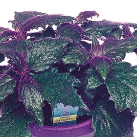 Pin On Over 400 Different Foliage Varieties