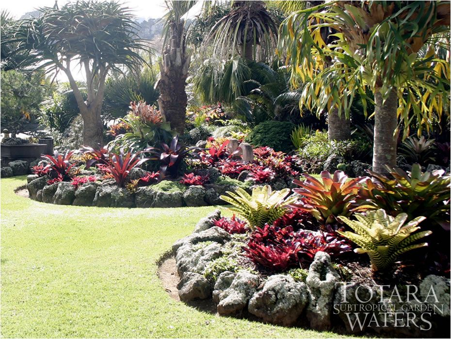 Gardening in south florida bromeliads in the garden for Florida backyard landscaping ideas