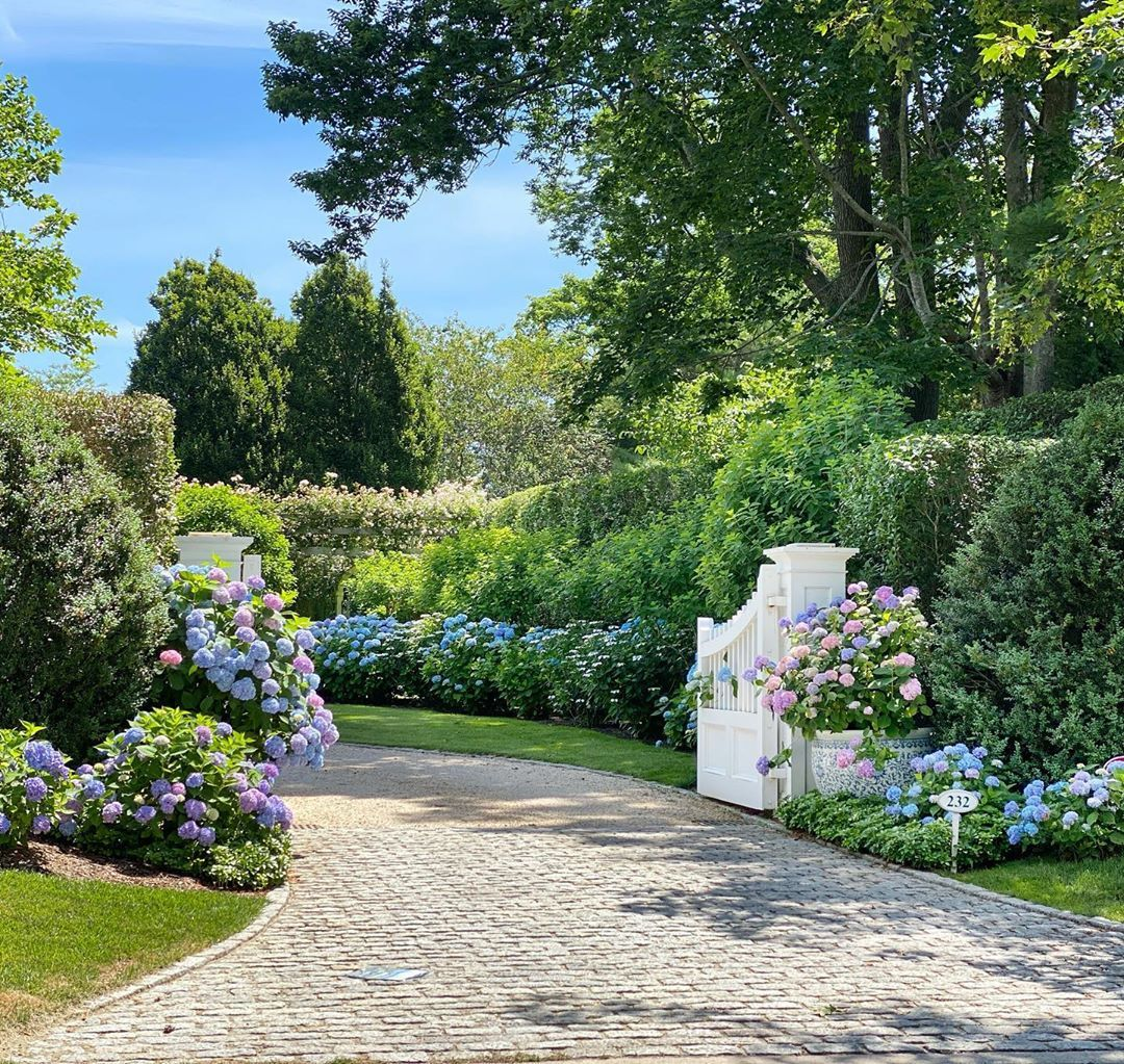 "🌳Kelli Delaney Kot🌳 on Instagram: ""💚How to make an entrance... . . . .  #hydrangea #sea #hamptons #garden #view #flowers #endless #summer #blooms #nikko #blue #instagarden…"""