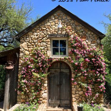 Best Peggy Martin Roses Adorn Stone Garden Shed House Roof 400 x 300