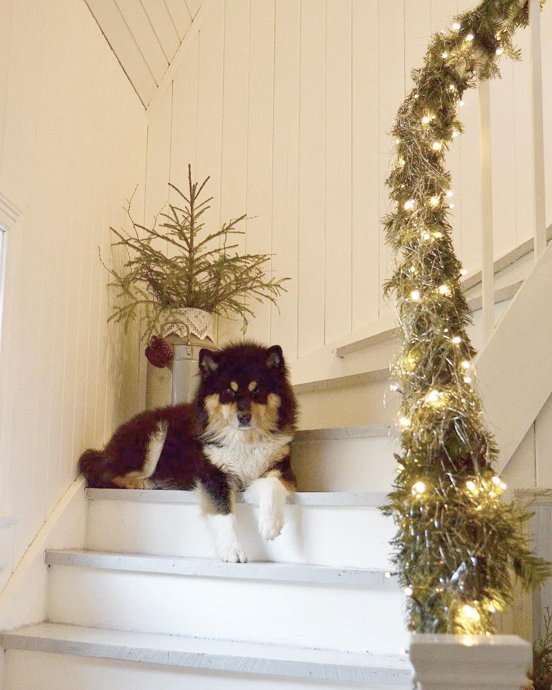 ~•~ riktig god jul ~•~ i dag er mannen min og vår fine hund, balto, på lang skitur ⭐️ jeg derimot skal på kjolejakt til astrid i anledning morgendagen ✨ bare kos med andre ord ⚜️