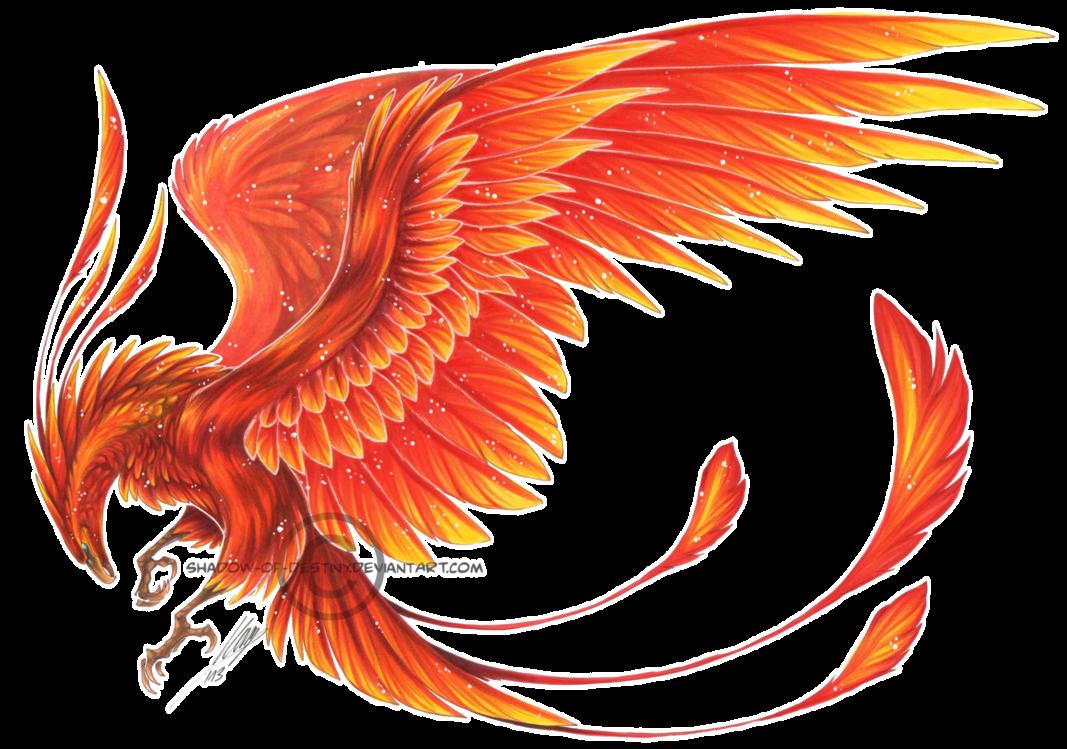 Картинки птица феникс на прозрачном фоне, февраля любимый открытки