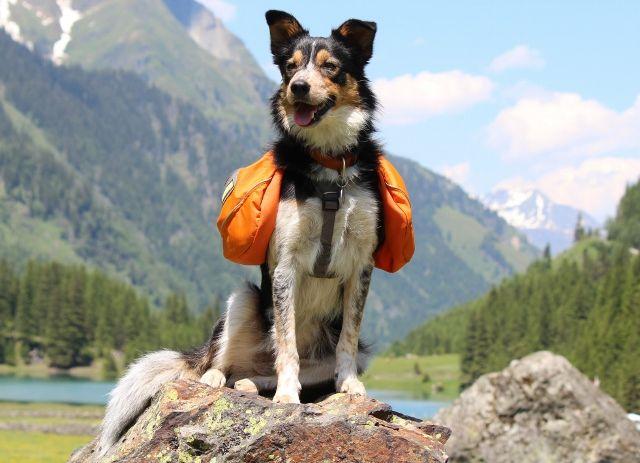 Border Collie Taz & Ruffwear Approach pack | Dogstuff | Pinterest ...
