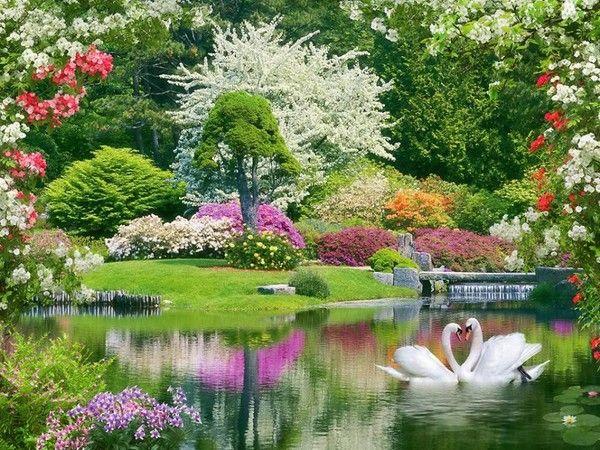 Beau jardin printemps pinterest beaux jardins carte anniversaire et le retour - Anniversaire jardin d acclimatation ...