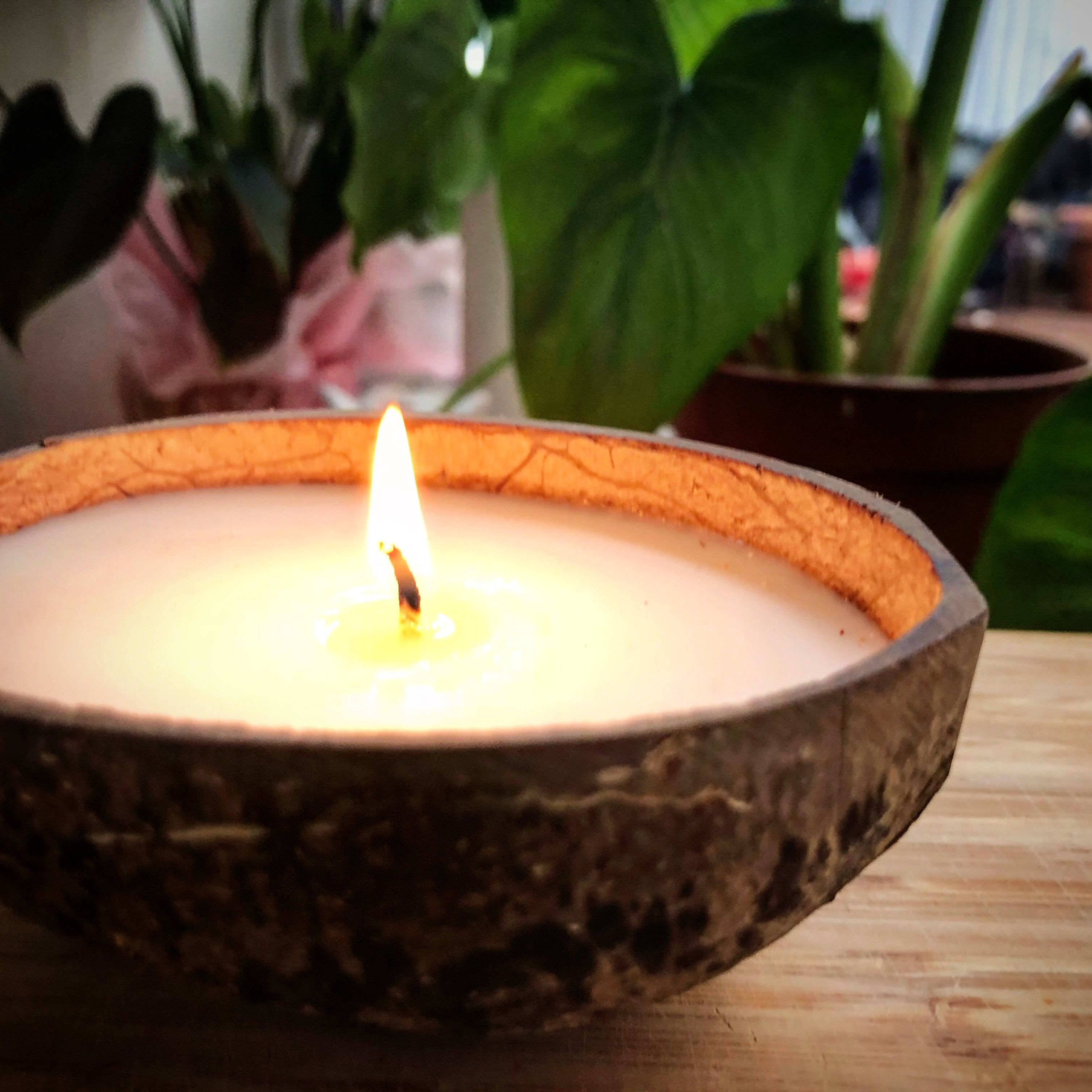 Rapeseed Shells  Hand poured Soy wax Soy was Rapeseed Aesthetic Shell large candle BIG shell colorful