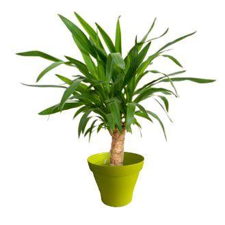 plante verte avec un tronc
