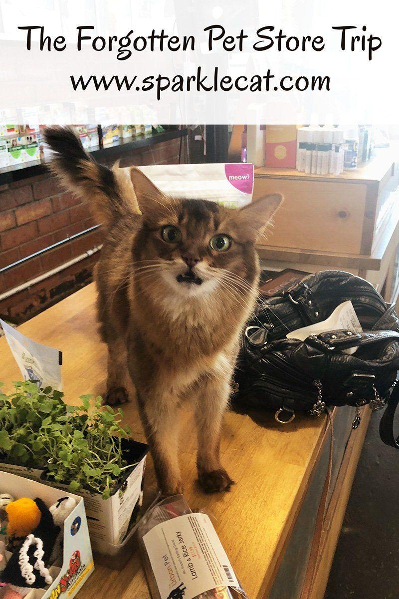 The Forgotten Pet Store Trip In 2020 Pet Store Adventure Cat Pets
