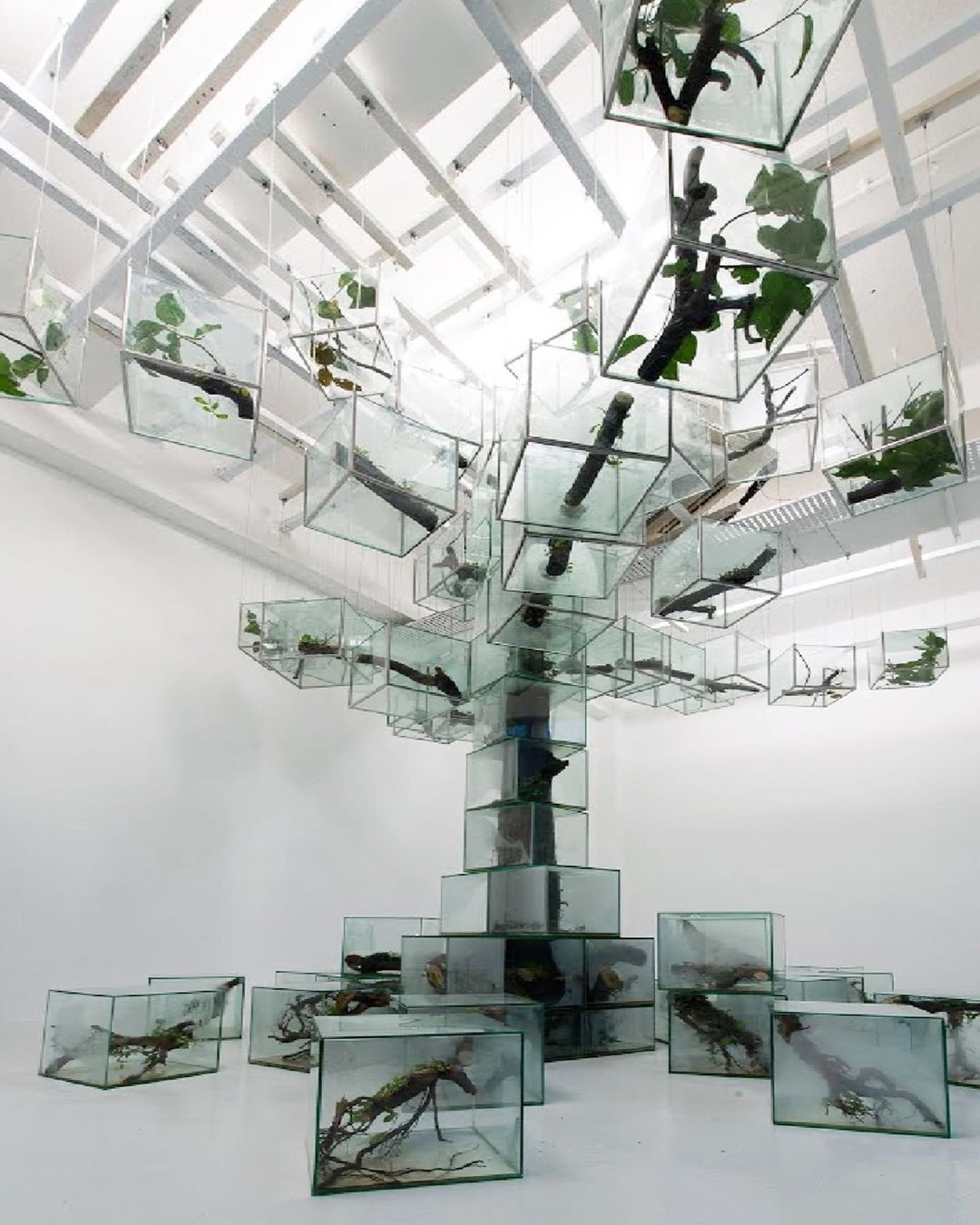 900+ Green Plants Art ideas in 2021