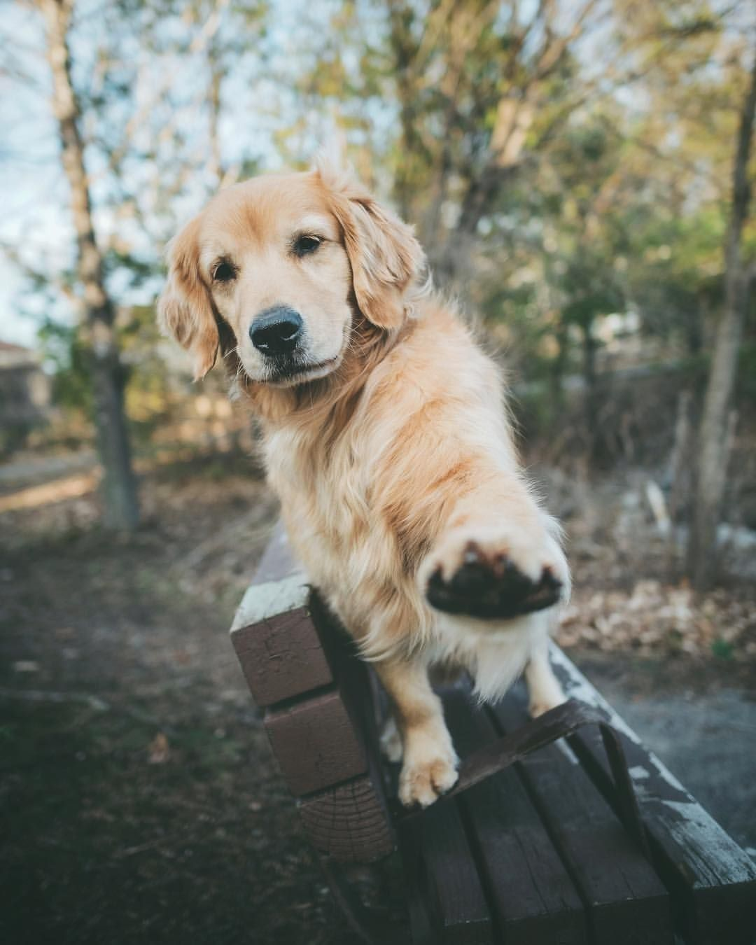 Hi There Love Me Baby Dogpictures Dogs Aww Cuteanimals